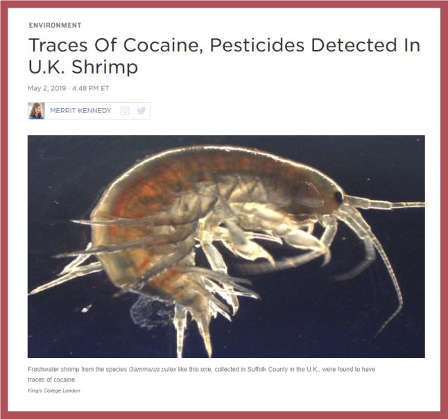 https://www.npr.org/2019/05/02/719600999/traces-of-cocaine-pesticides-detected-in-u-k-shrimp